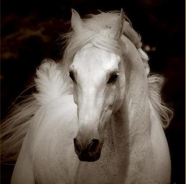 Beautiful white horse with full mane.